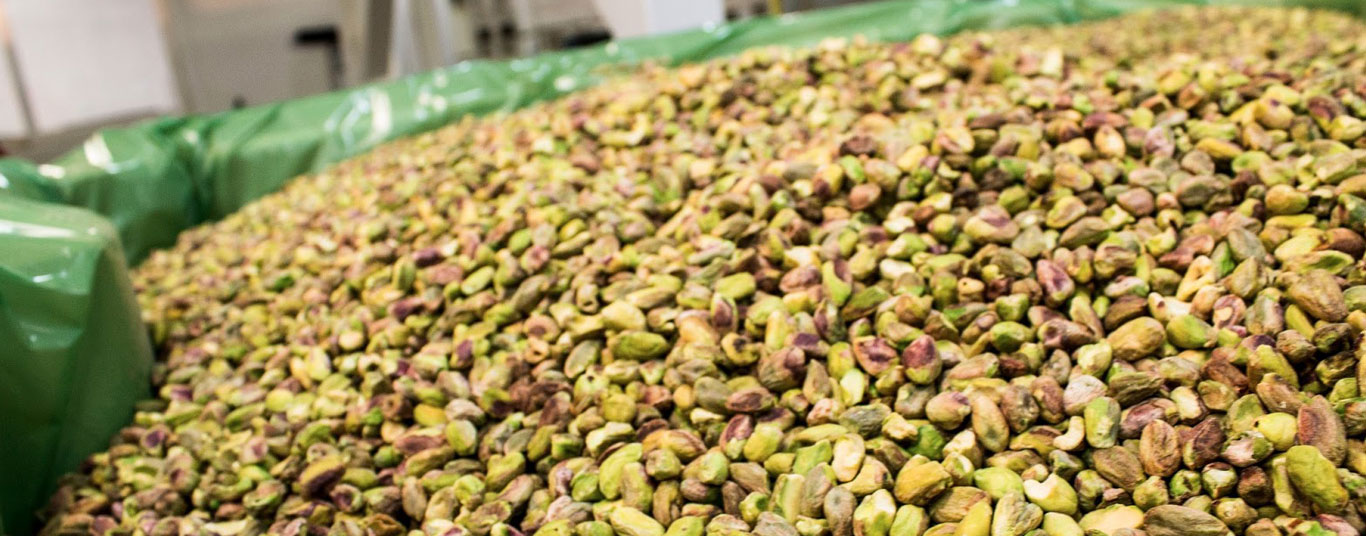 Growing pistachios for more than 100 years...